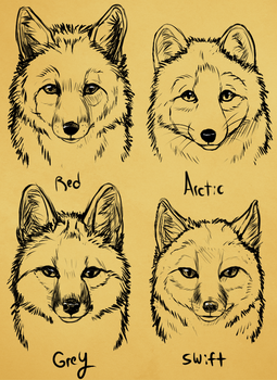 Winter  North America Fox faces by Skeleion