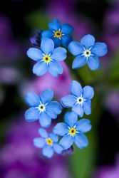forget me not 2 by Liquid82