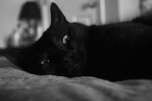A Cat's Life by MelodicComet