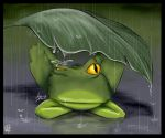 Frog by Cerebrate