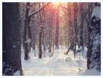 Winter Forest Sun by MikeMS
