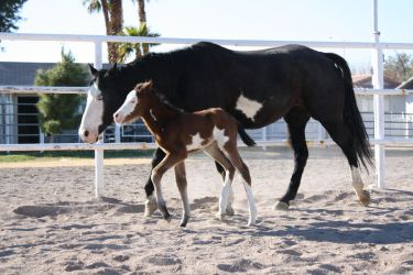 Mare anf Foal 2 by Mustang4-Stock