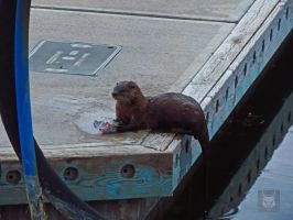 Another River Otter With Snack by wolfwings1