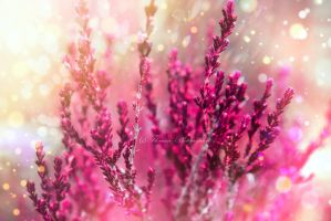 Dream of spring by Floreina-Photography