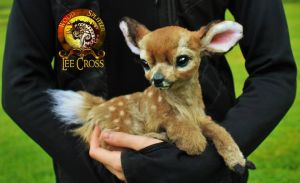 Sold, Poseable Fawn! by Wood-Splitter-Lee