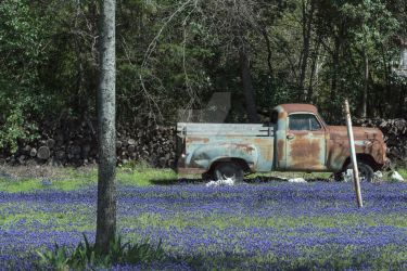 Rusty Truck in Bluebonnet Yard by stretchc