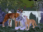Realistic tigers for you by Rikuko