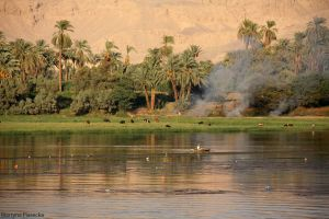 Nile by Piasecka