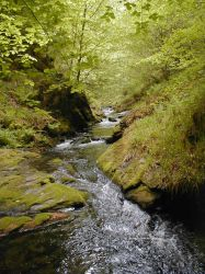Woodland Stream by lurker-