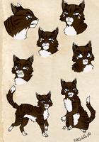 Hawkfrost Concept 2 by PuffCats