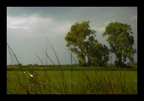 Rice fields after the storm by kalany