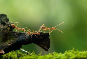 Ant by robertfly