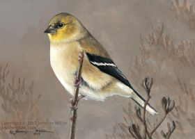 Winter Goldfinch by Nambroth