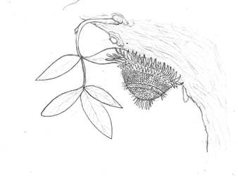 Dendrospinoides by Dragonthunders
