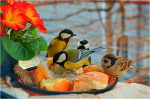 The hungry bird band early in the morning.. :) by MamaMika