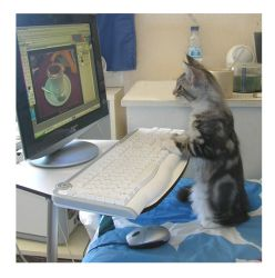 Cat at the pc by Flore