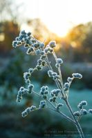 Untitled Frost IV by SarahJPhotography
