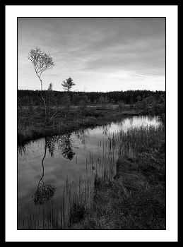 Alone on a swamp by eswendel
