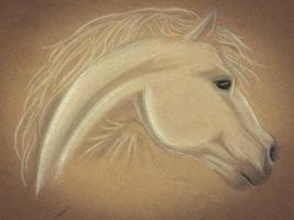 White charcoal horse  by peterfrancisfahy