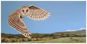 Barn Owl in flight by Helenr251