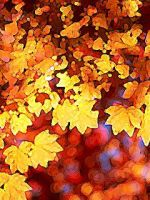 autumn leaves golden by bigbadnosh