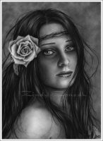 Deserted Rose by Zindy
