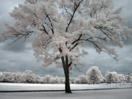 Infrared Tree by ilimel