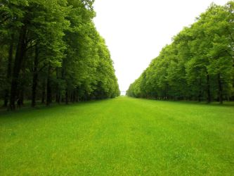 Green Pasture 15345928 by StockProject1
