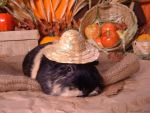 Fall Guinea Pigs: P-Chan by LadyTsunade