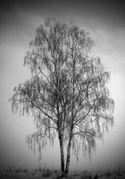 The dreaming tree by RobinHedberg