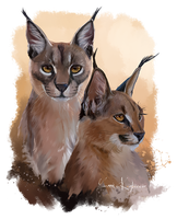 Two big cats Caracal by Kajenna