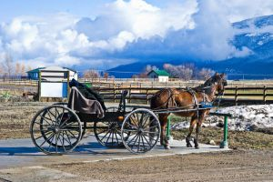 Montana Amish by quintmckown