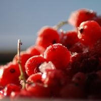 Red currant_2 by MariStel