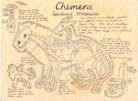 Chimera Anatomy by Xenothere