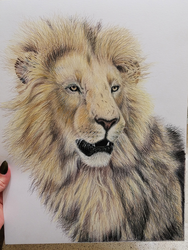 African Lion Portrait by Gray-Ghost-Creations