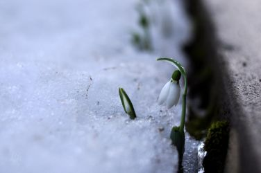 spring messanger by Lk-Photography