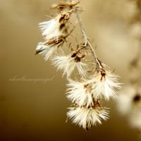 Feathered by charliesmyangel