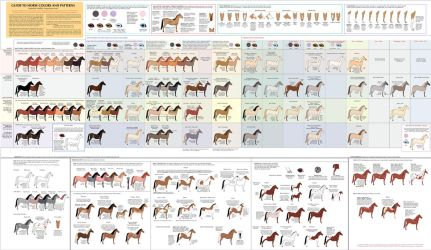 Guide to Horse Colors and Patterns by Majnouna