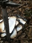 The burnt pages of a love book... by ZeitlosLotus