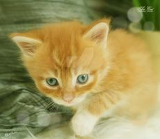 The Cat by desideriasp