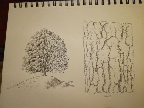 Inktober 2017, Days 14-15: pine bark and oak tree by GLangGould