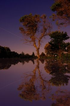 Tree in water by Mare1234