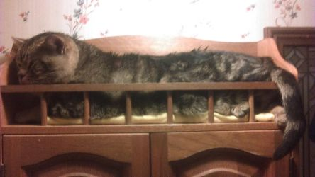 Bleau Kitty on Medicine Cabinet by JhawkR2010