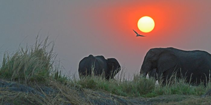 On the banks of Chobe River by NB-Photo