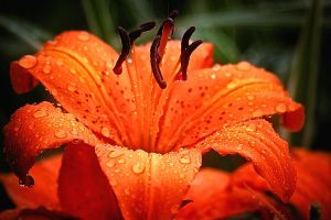 Raindrops keeping fallin on my by Witch-Dr-Tim