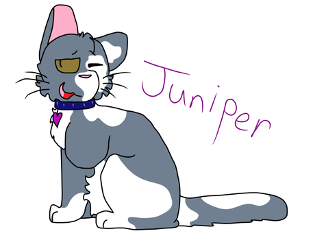 Juniper by XCyndaquilKittyX
