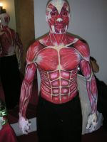 Muscles by englund