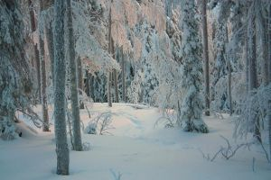 Snowy forest 7 by Esveeka-Stock