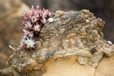 Succulents at Point Lobos by KabakaLion