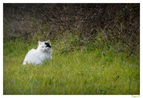 Cat in the meadow. by laminimouse